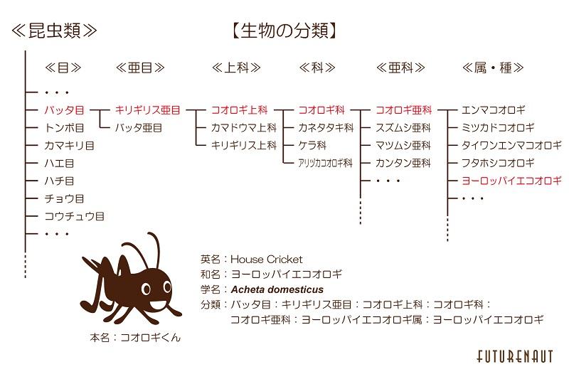 生物の分類